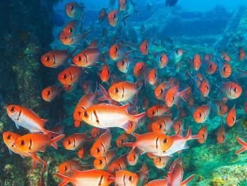CABO VERDE- Estancias en Isla de Sal- Hoteles MELIA hasta 31 de Octubre desde península
